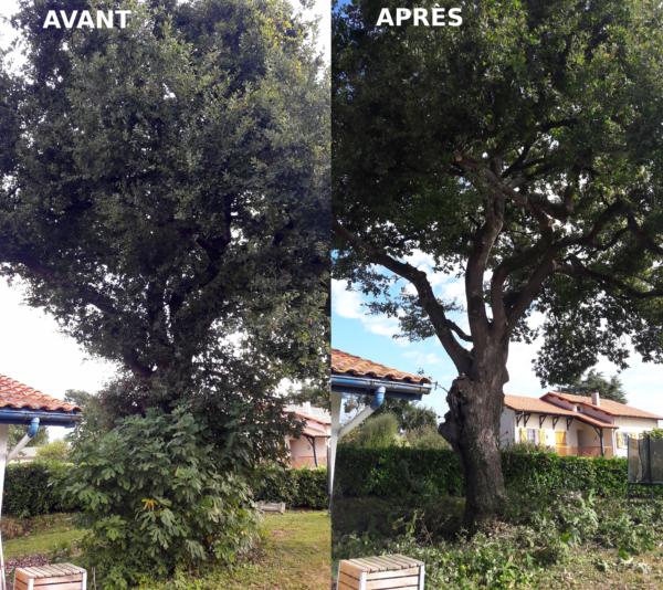 Nettoyage et éclaircie sur un chêne ayant subit une ancienne taille sévère