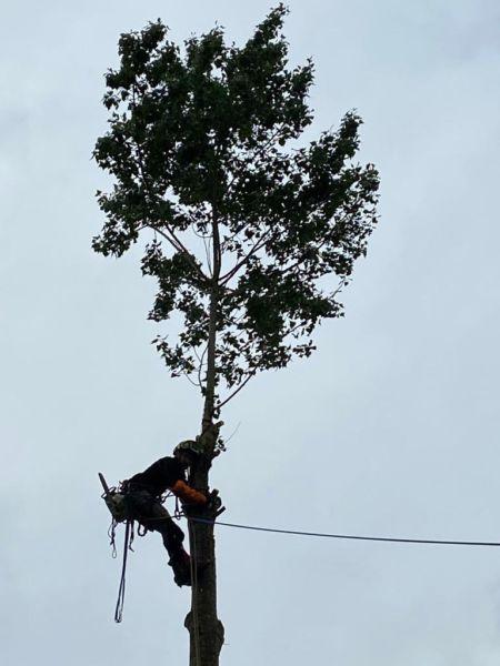 <strong>démontage arbre en tyrolienne</strong> <em></em><br  /></p><p>